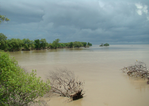 Wonorejo-Mangrove-Ecosystem
