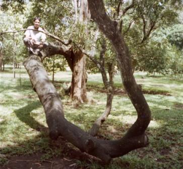 My friend on spiralling tree